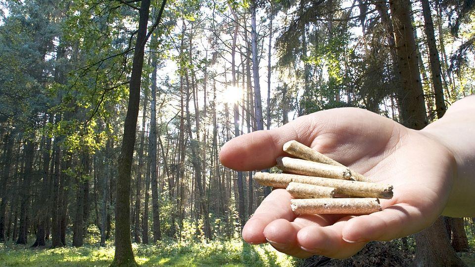 Der Pellet-Boom bringt Wälder in Not